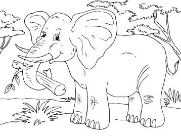 Раскраски африканские животные