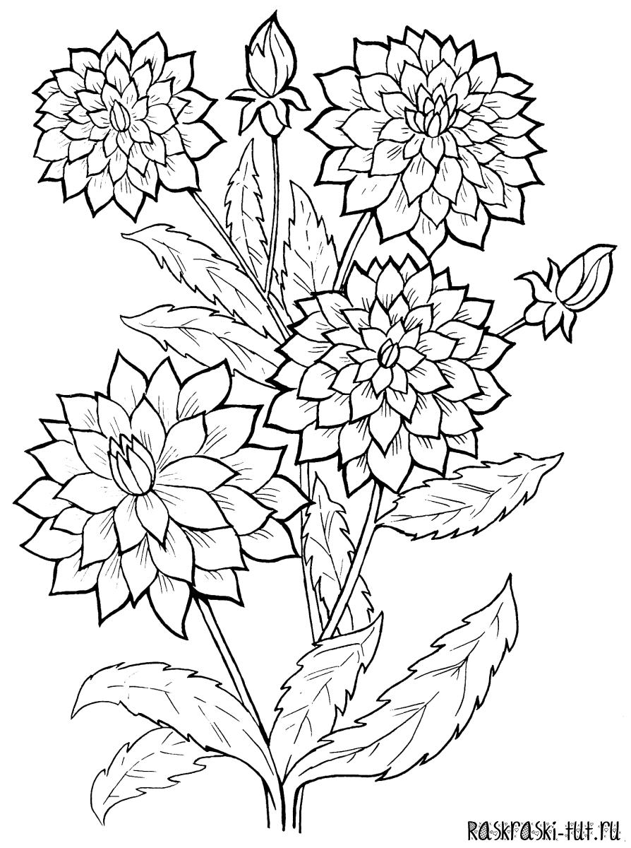 Распечатать раскраски Цветов #2
